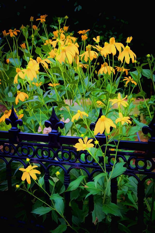 Yellow Coneflowers Echinacea Wrought Iron Gate Photograph