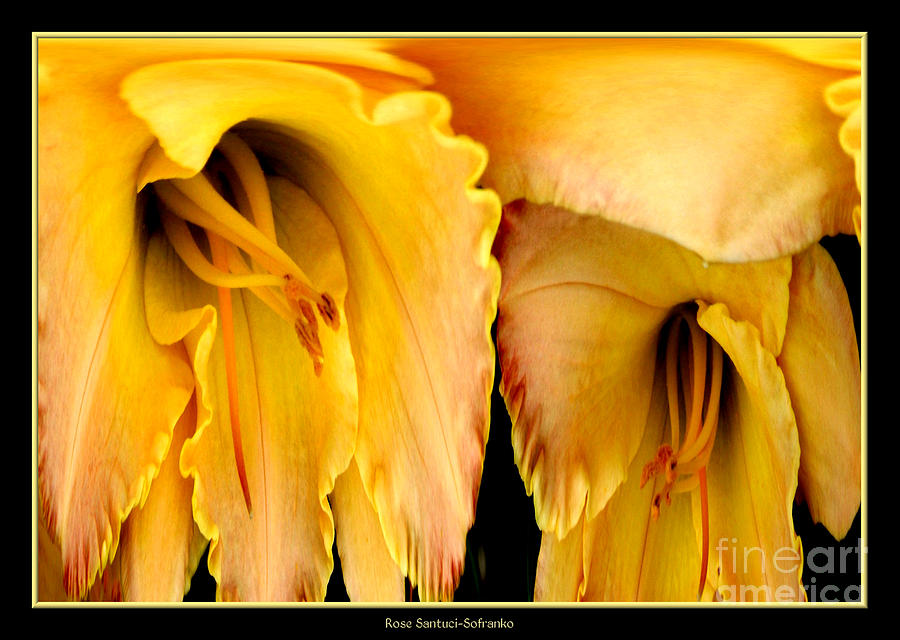 Yellow Daylily Abstract Photograph