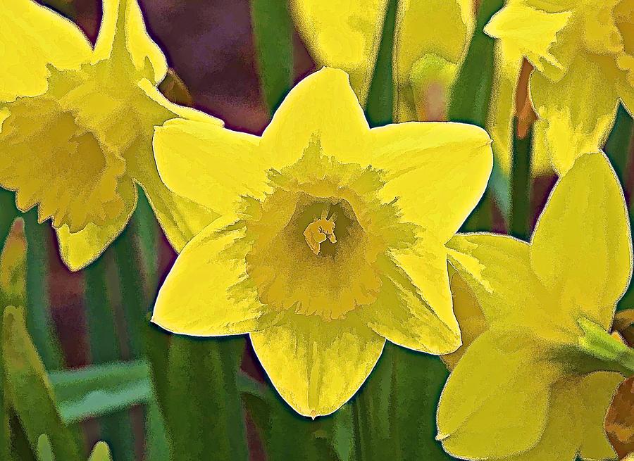Yellow Flower Iris Photograph