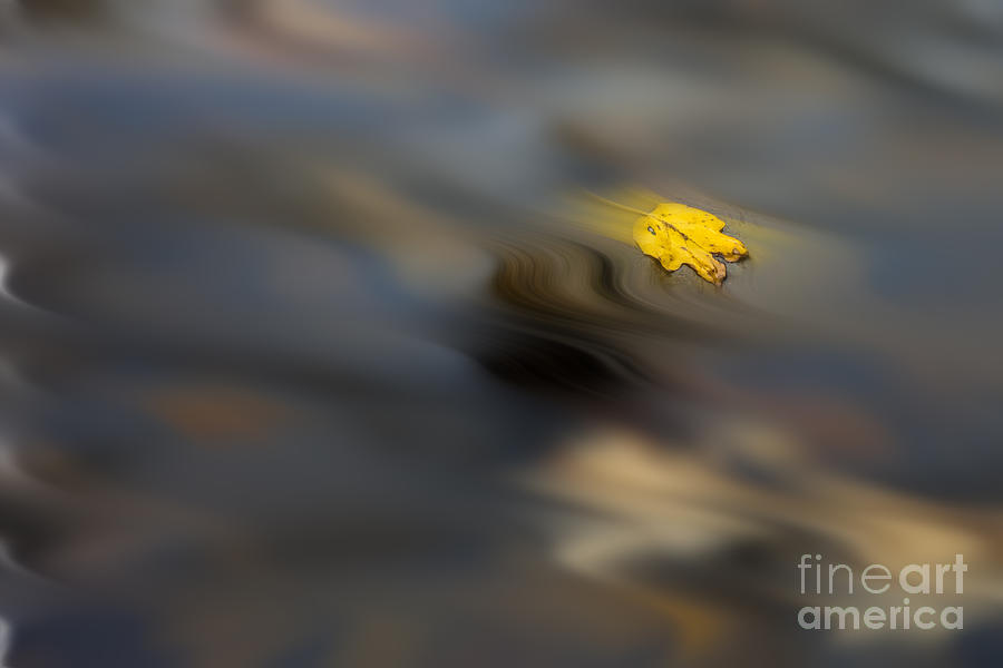 Yellow Leaf Floating In Water Photograph