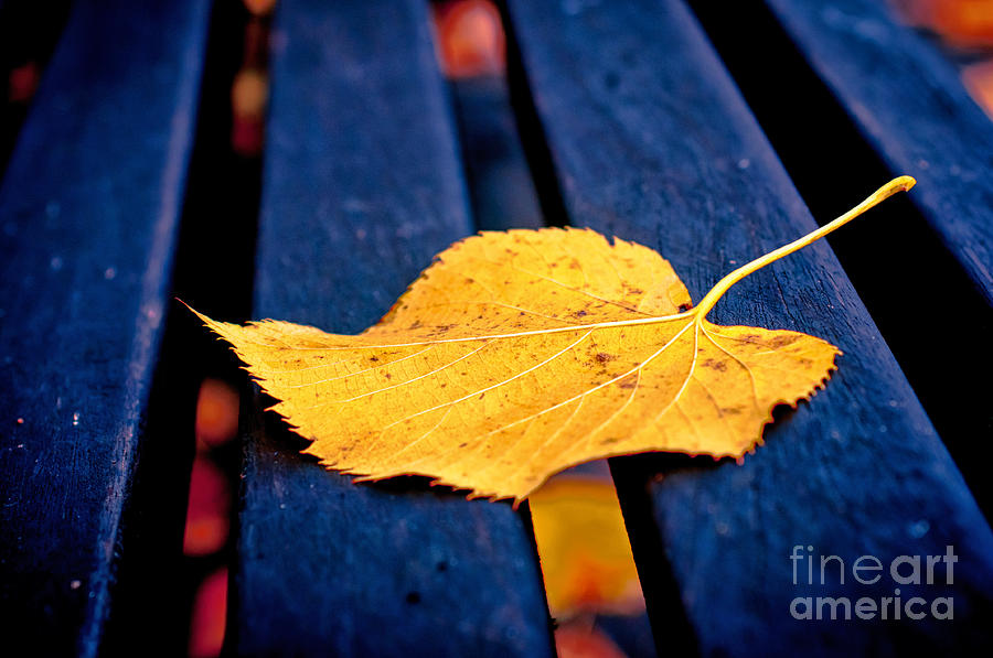 Yellow Leaf On Bench II Photograph  - Yellow Leaf On Bench II Fine Art Print
