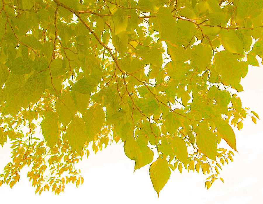 Yellow Nature-tree And Sky Photograph  - Yellow Nature-tree And Sky Fine Art Print