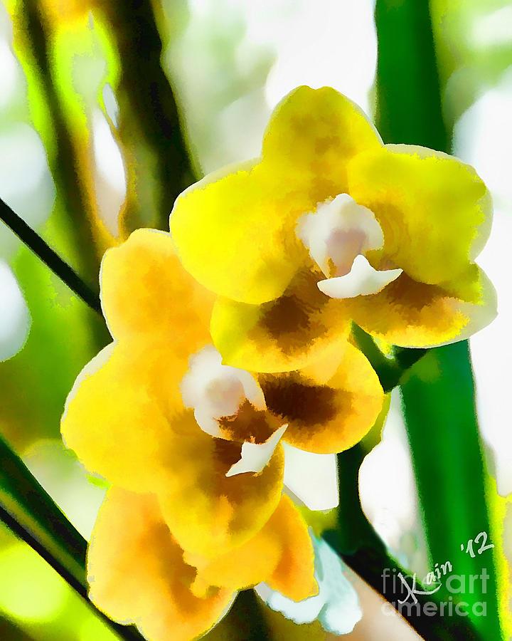- yellow-orchids-john-kain