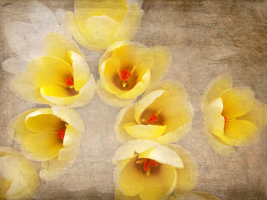 Yellow Petals Photograph  - Yellow Petals Fine Art Print