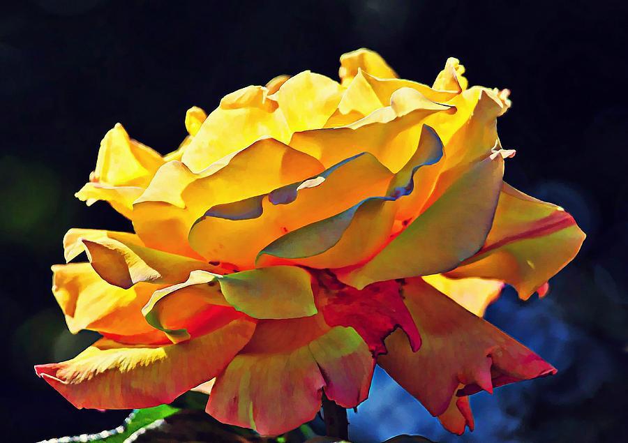 Yellow Rose Series - Crispy Digital Art
