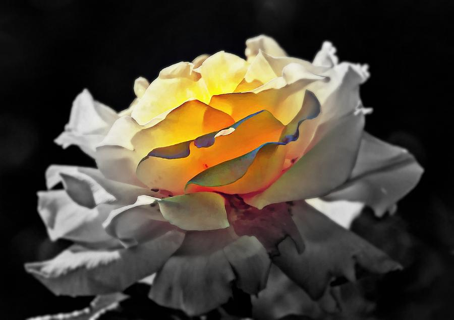 Yellow Rose Series - ...but Soul Is Alive Digital Art  - Yellow Rose Series - ...but Soul Is Alive Fine Art Print