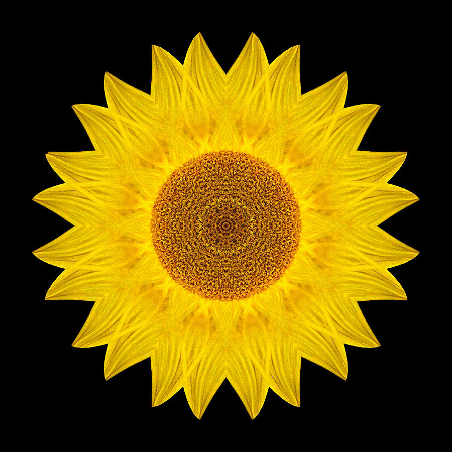 Yellow Sunflower Ix Flower Mandala Photograph