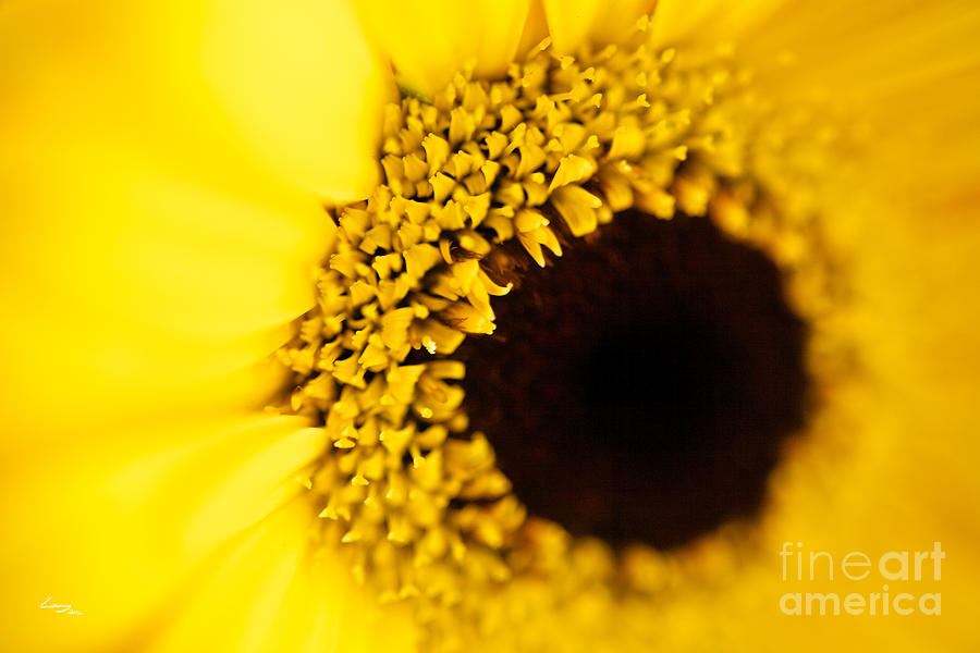 Yellow Photograph