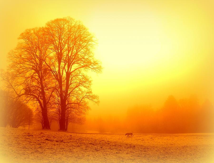 Yellow Winter Sunrise Photograph