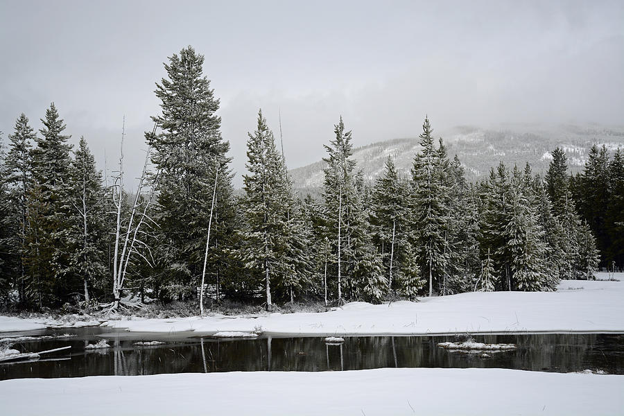 Yellowstone Photograph - Yellowstone Gibbon Meadows Spring Snow And Reflection by Bruce Gourley