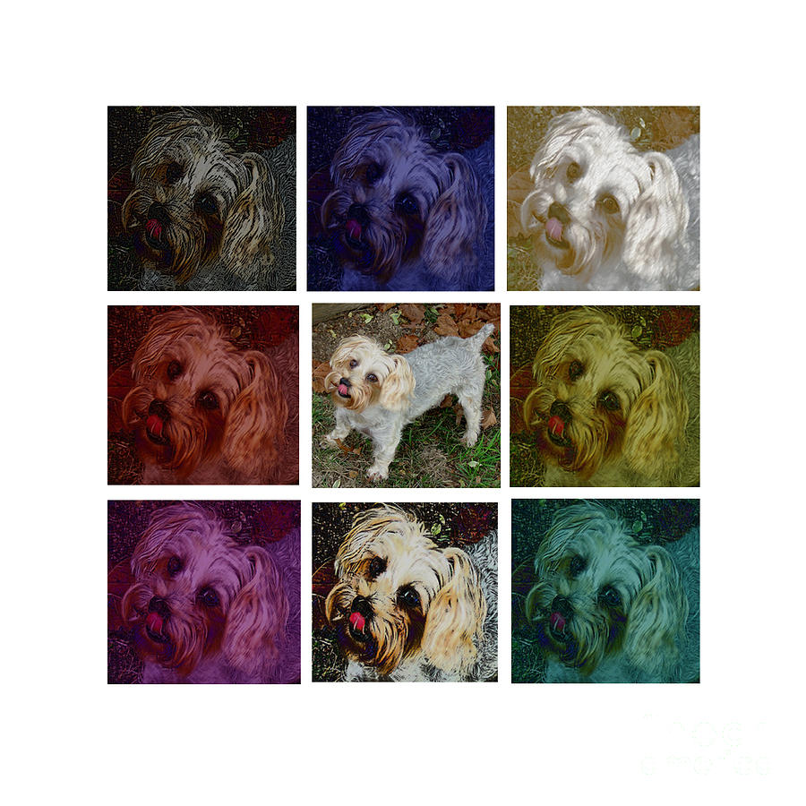 Yorkie Poster Photograph