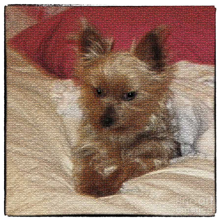 Yorkiehood Photograph  - Yorkiehood Fine Art Print