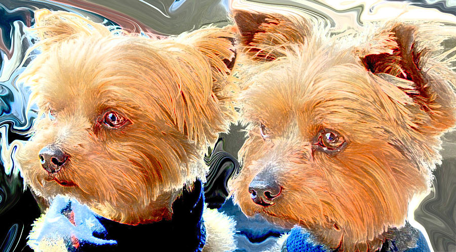 Yorkies Digital Art  - Yorkies Fine Art Print