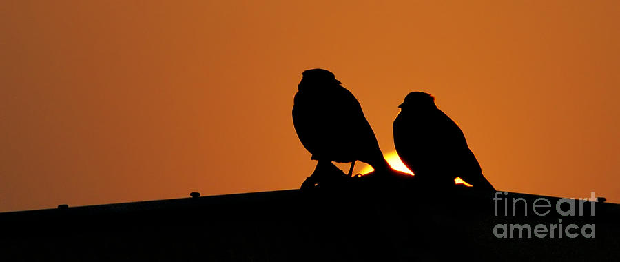Love Photograph - You And Me by Vineesh Edakkara