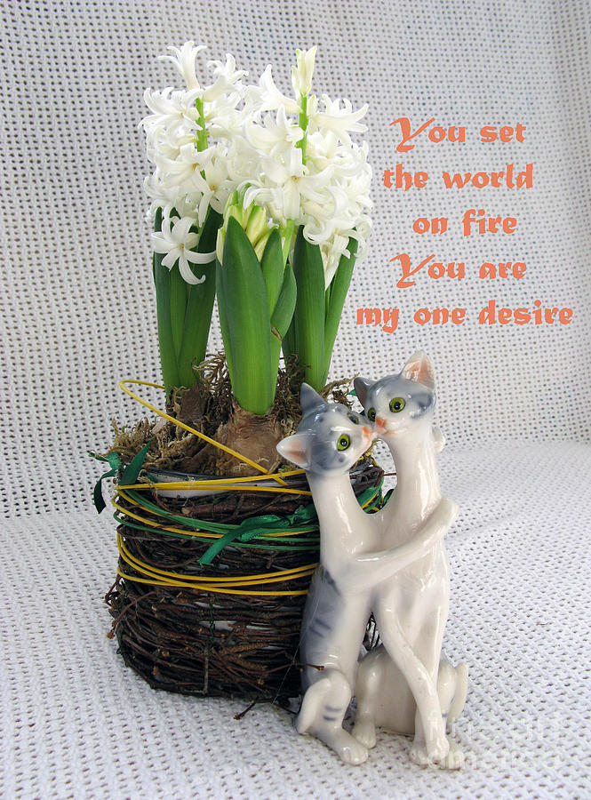 You Are My One Desire Photograph  - You Are My One Desire Fine Art Print