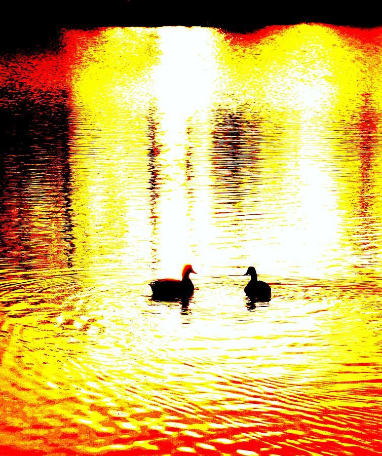 You Light Up My Life  Photograph