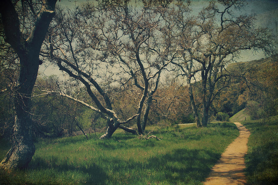 Sunol Regional Wilderness Photograph - You Smiled And I Knew by Laurie Search