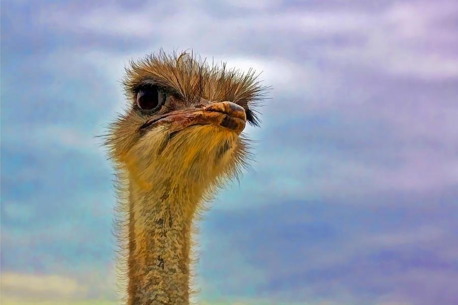 Closeup Photograph - You Talkin To Me by Gary Holmes