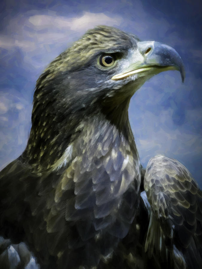 Young Bald Eagle V2 Digital Art