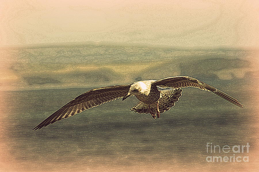 Young Gull Photograph  - Young Gull Fine Art Print
