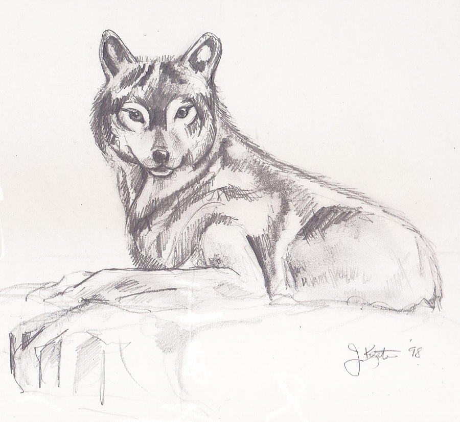 Young Wolf Drawing