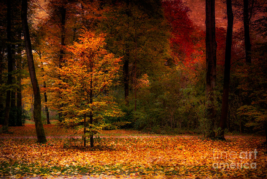 Autumn Photograph - Youth by Hannes Cmarits