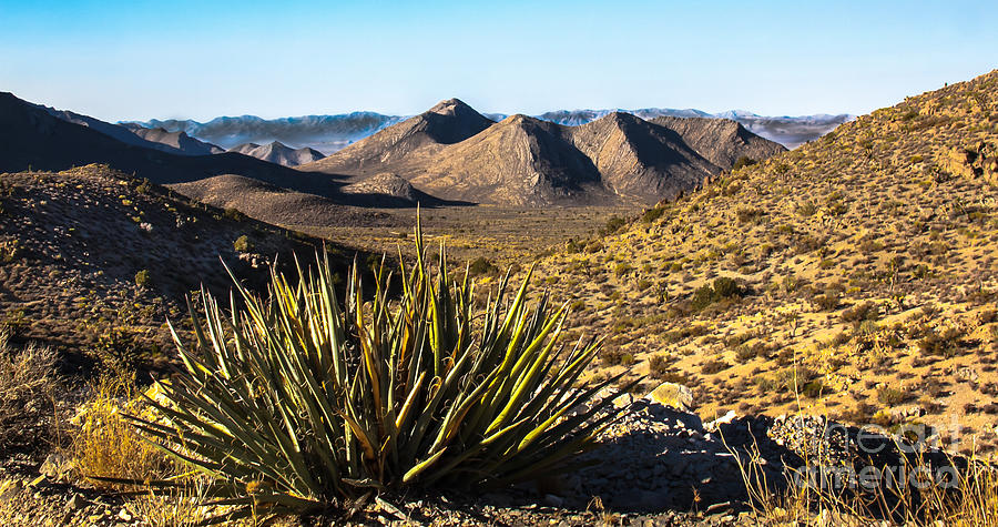 Nevada Photograph - Yucca In High Deaert by Robert Bales