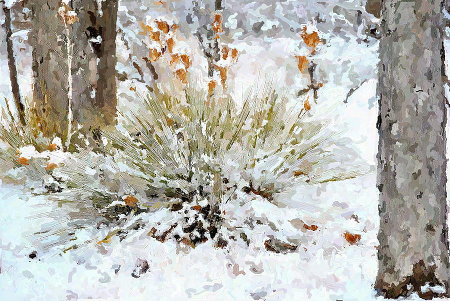 New Mexico Digital Art - Yucca In The Snow by John Cullum