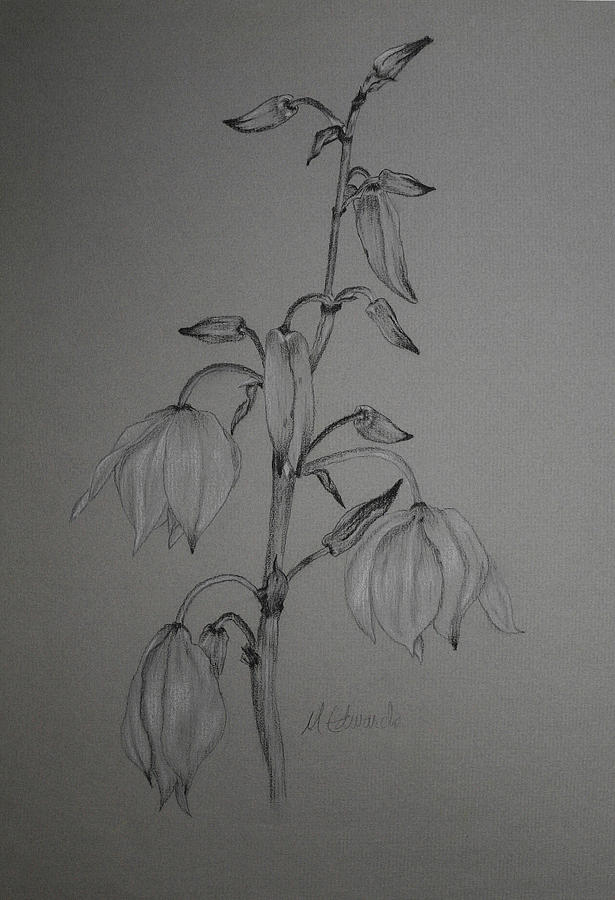 flower edwards