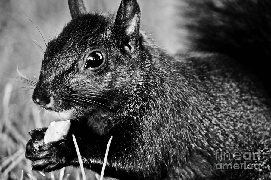 Animal Pyrography - Yummy Nuts by Fatemeh Azadbakht