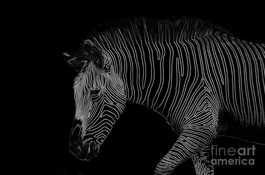 Zebra Art Digital Art