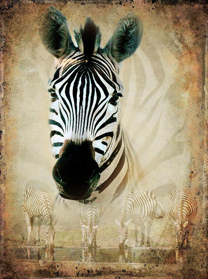 Zebra Photograph - Zebra Profile by Ronel Broderick