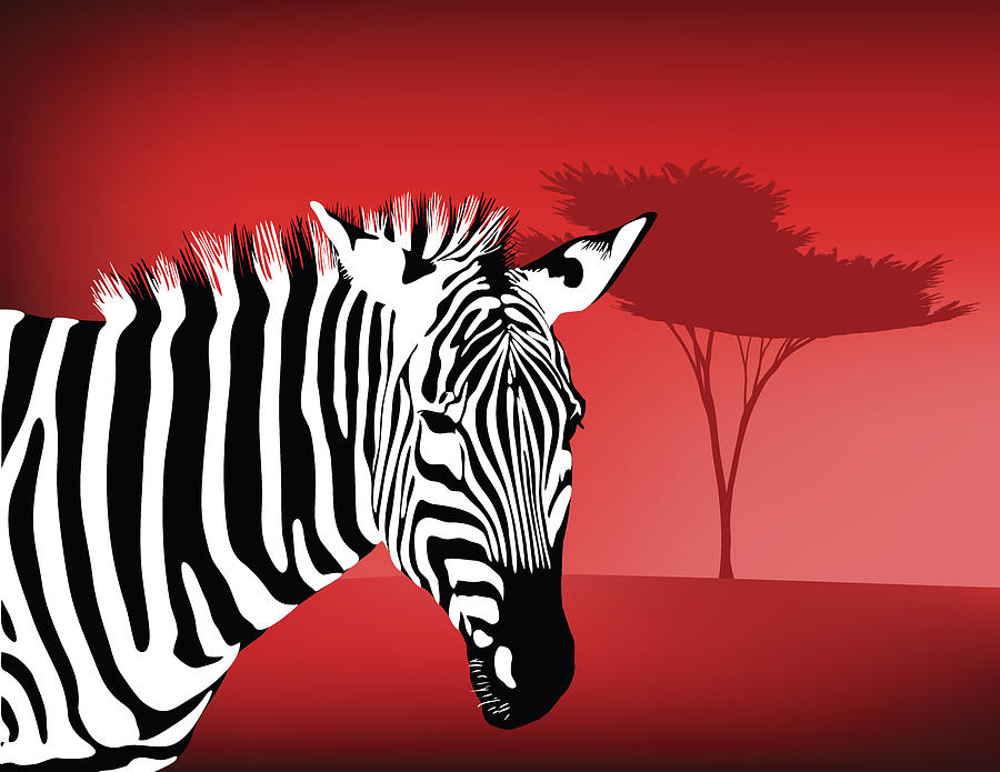 Zebra Profile With Dra...