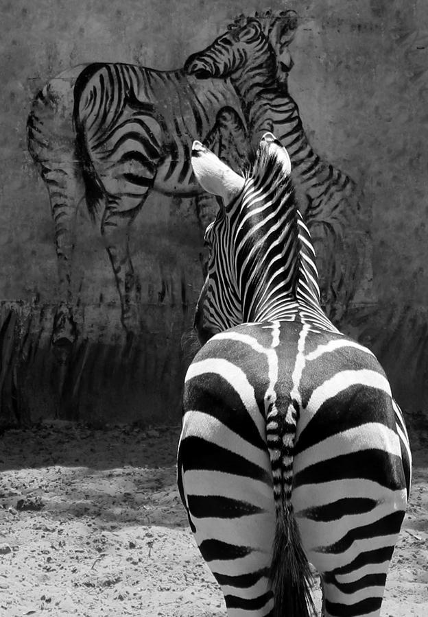 Zebra Pyrography - Zebra by Veronika Limonov