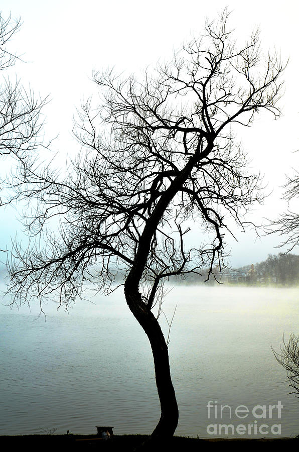 Zen Tree In The Mist Photograph