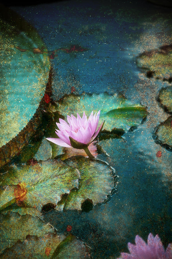 Zen Water Lily PhotographZen Water Images