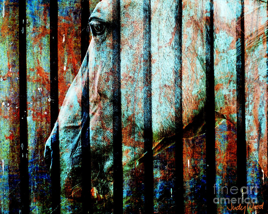 Horse Digital Art - Zeniah Variation 11 by Judy Wood