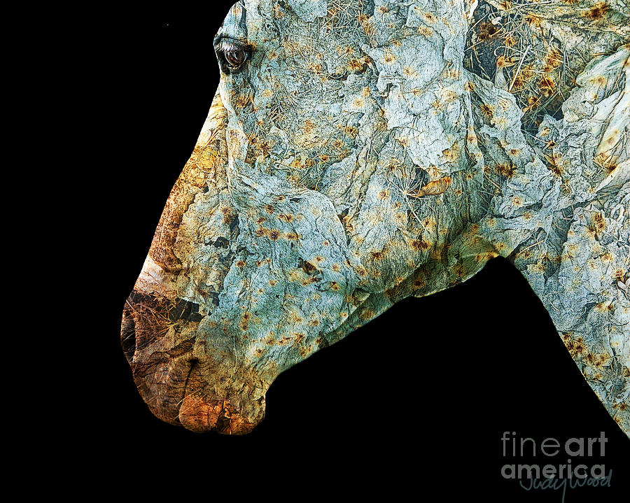 Horse Digital Art - Zeniah Variation 7 by Judy Wood