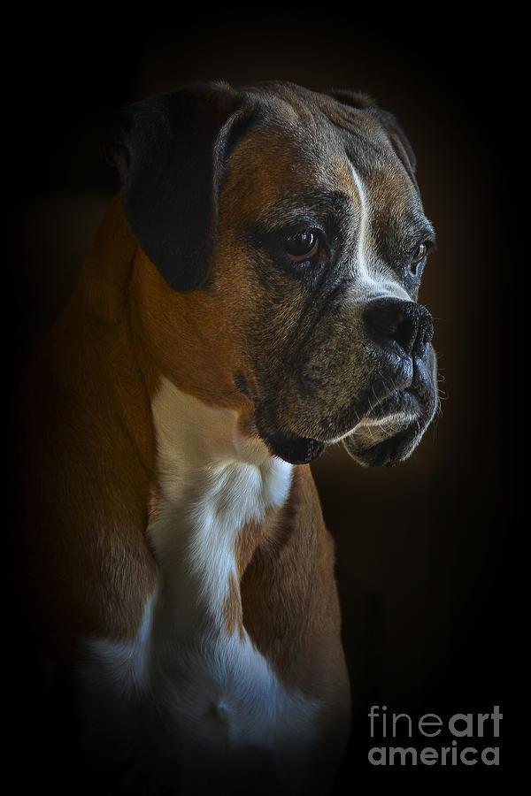 Zoey Photograph