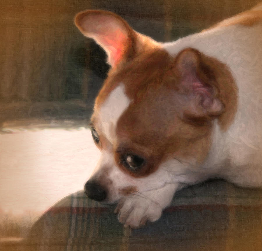 Dog-puppies-canine-animals-pets-chihuahuas-digital Photo Paintings-greeting Cards Digital Art - Zora by Posey Clements
