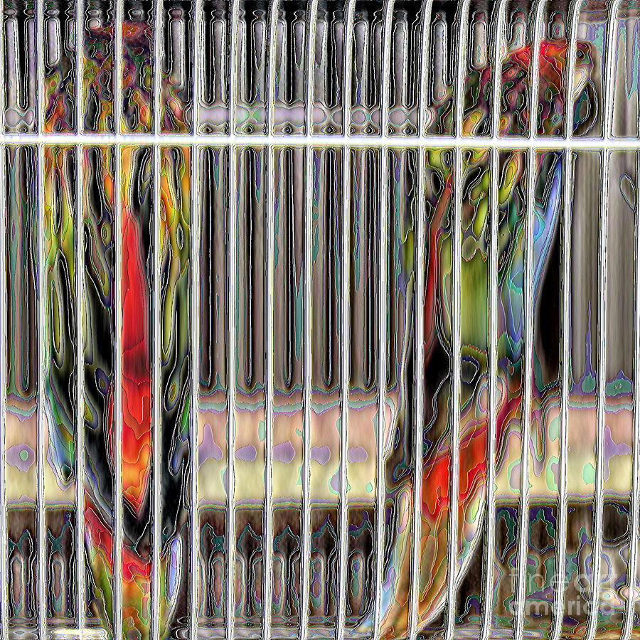 2 Fiery Rosellas Photograph