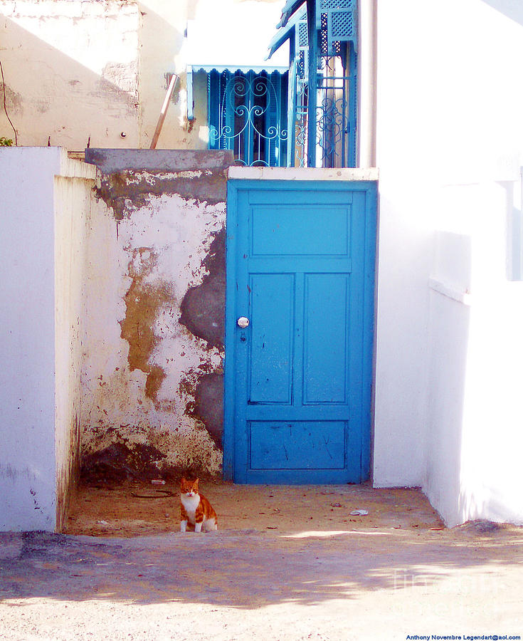 Blue Door Cat Photograph  -  Blue Door Cat Fine Art Print