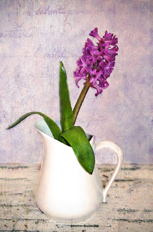 Flowers Photograph -  Hyacinth by Kathy Jennings