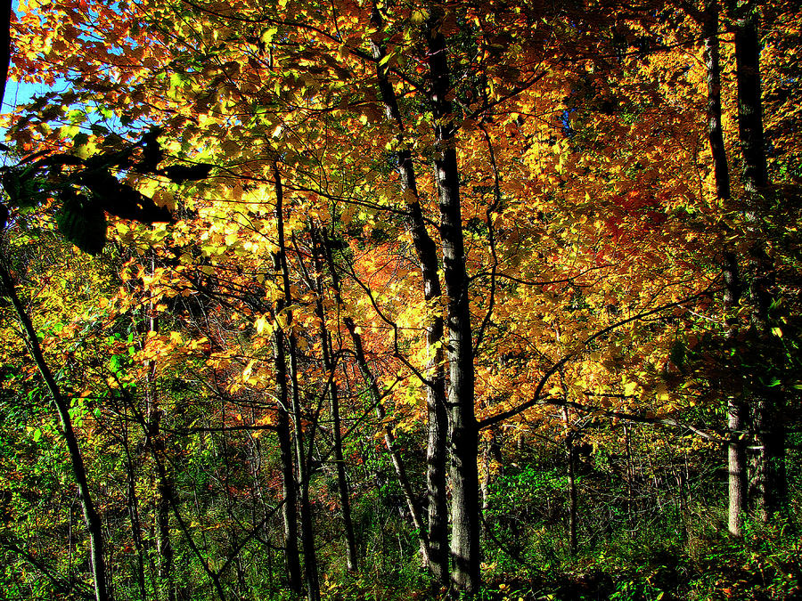 Michigan Fall Colors 2  Photograph  -  Michigan Fall Colors 2  Fine Art Print