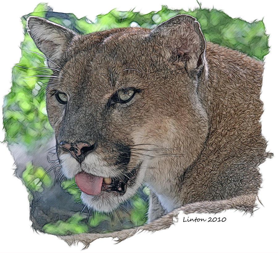 Panther 2 Digital Art