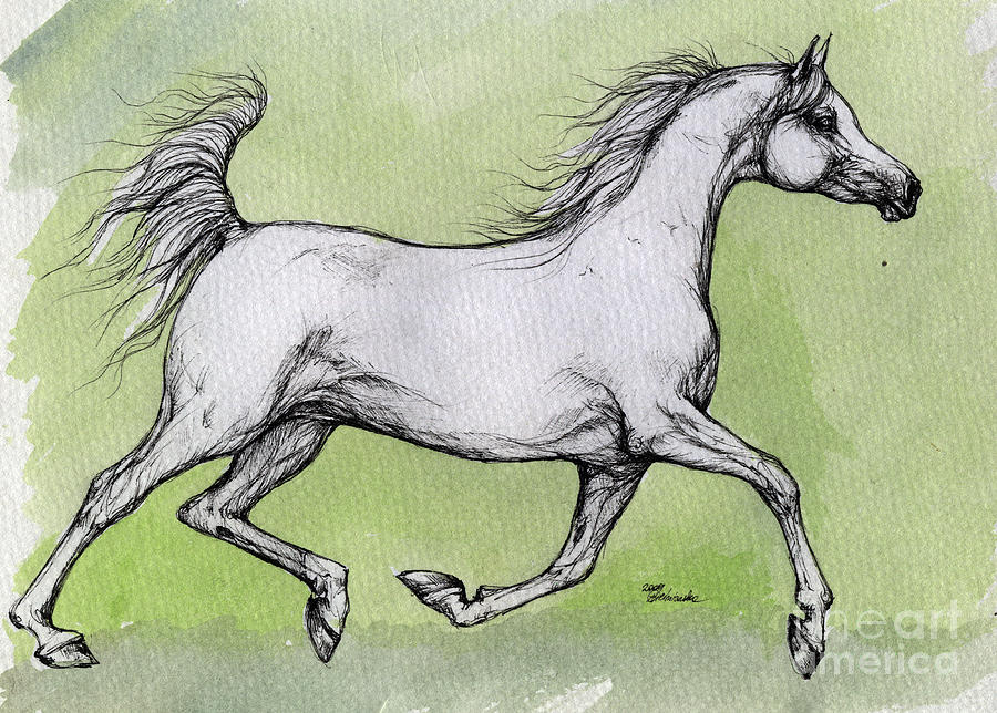 Running arabian horse drawing - photo#17
