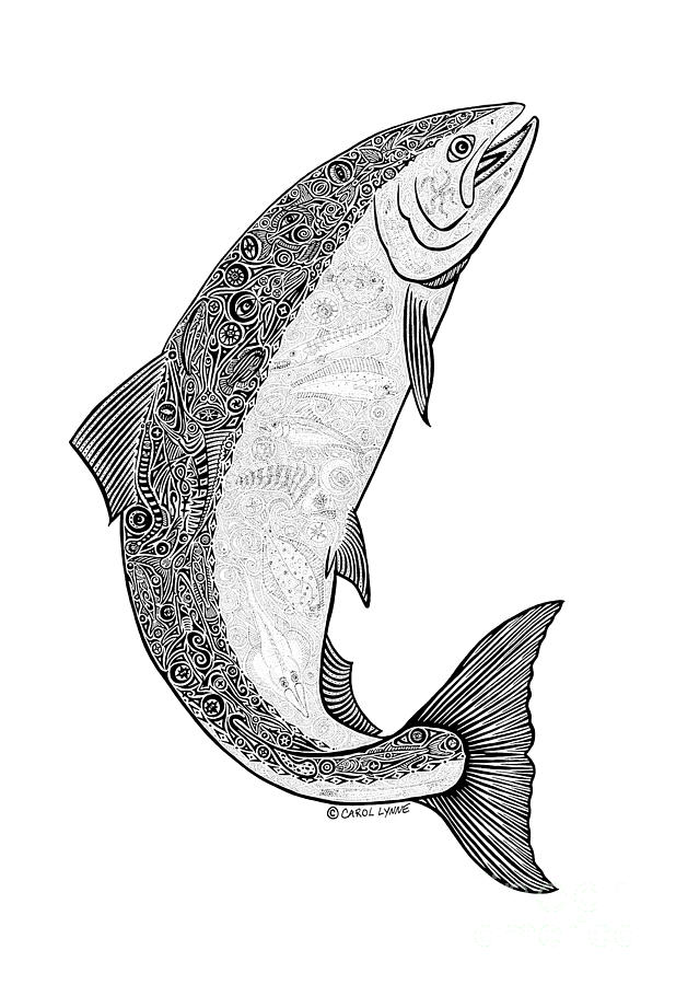 Salmon II Drawing  -  Salmon II Fine Art Print