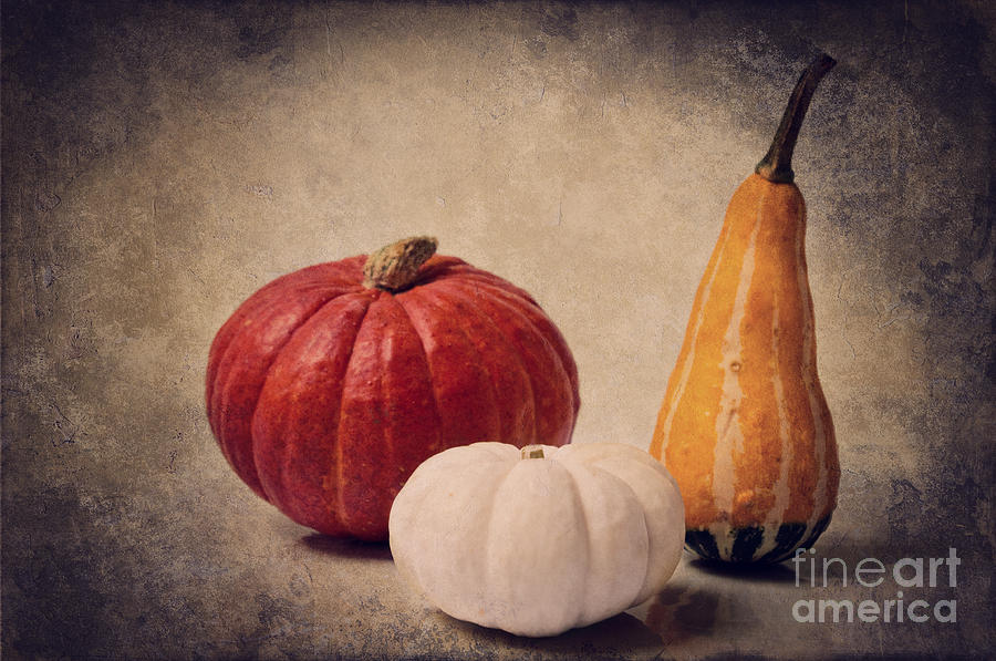 Three Pumpkins Photograph