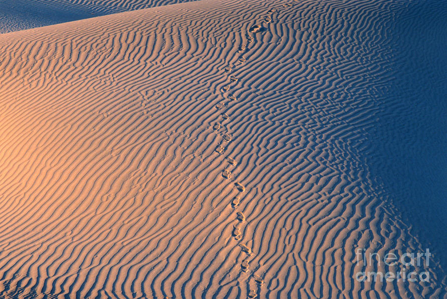 Tracks At First Light In Death Valley Photograph