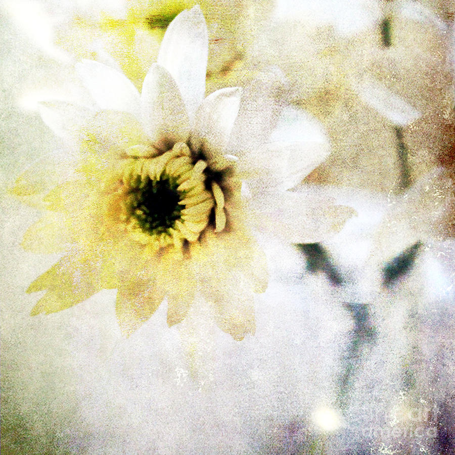 White Flower Mixed Media  -  White Flower Fine Art Print